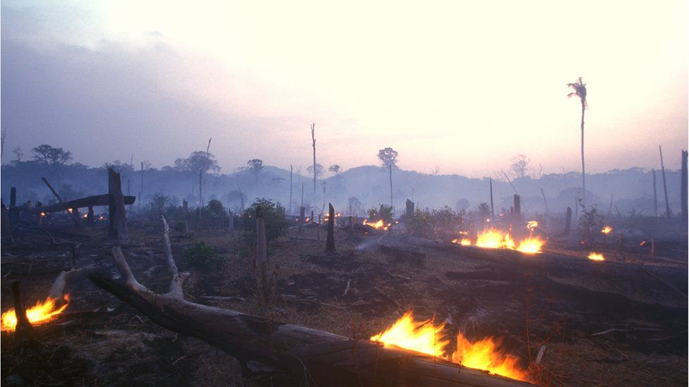 Trees being burnt and land cleared in the Brazilian Amazon rainforest